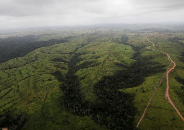 在巴西亞馬遜森林中無樹地區的鳥瞰圖