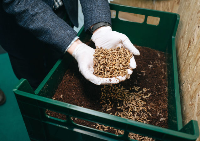 「Entoprotech 」公司昆蟲生物活體乾燥生產線