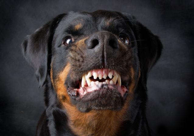 犬學專家介紹狗產生攻擊行為的5個原因