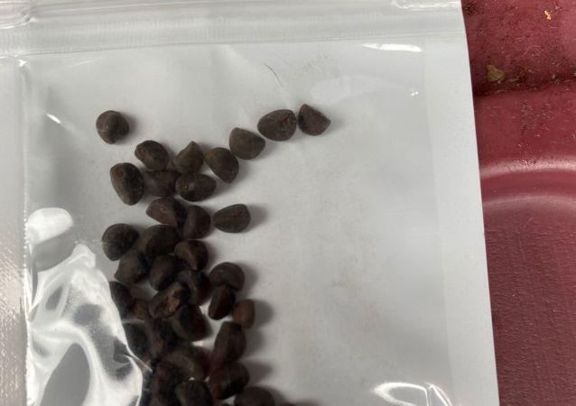 種子(資料圖片)