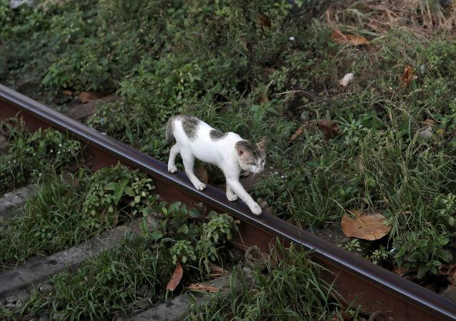 貓在雅羅斯拉夫爾郊外機場跑丟五個月後終被發現