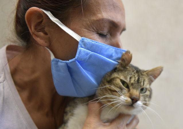 瑞士發現首例感染冠狀病毒的家貓但沒傳播危險