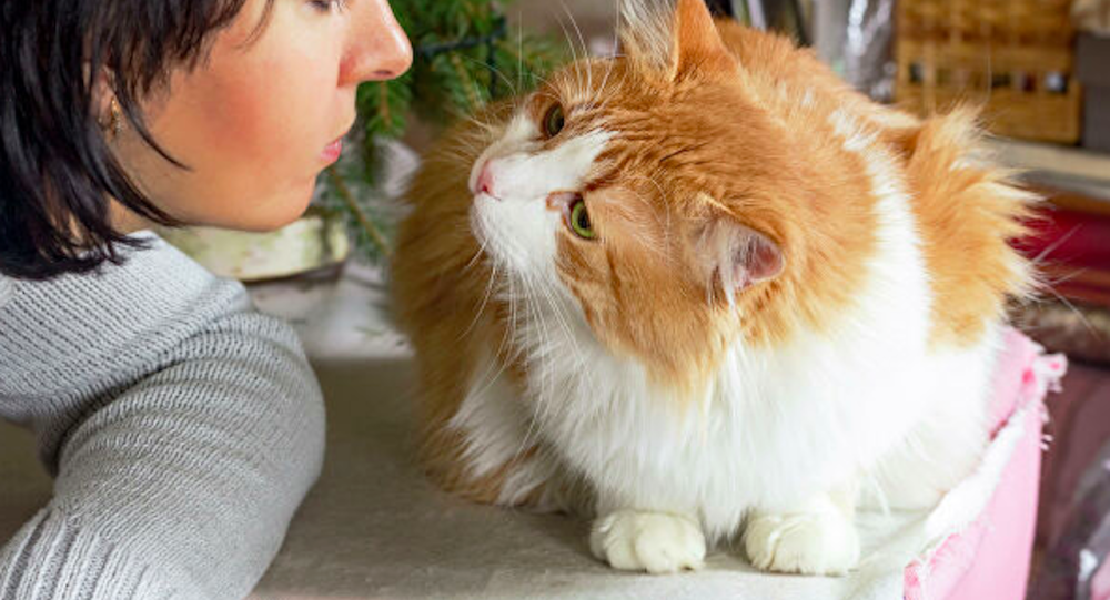 英國一家人找到失蹤12年的愛貓