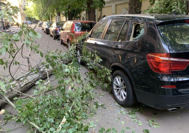 莫斯科大樹被強風吹倒(資料圖片)
