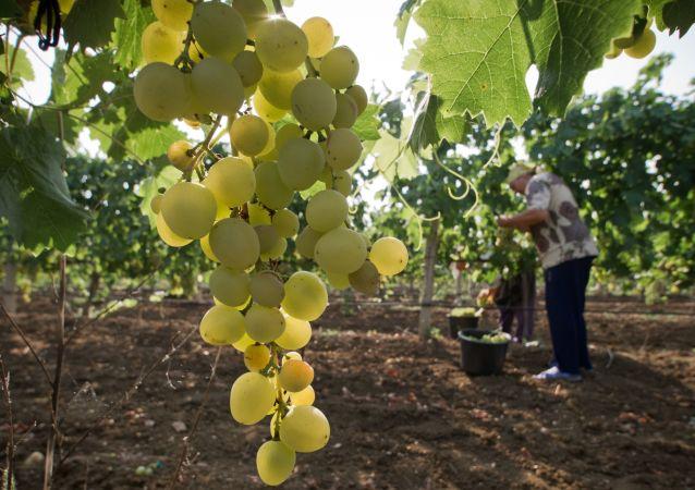 農學家指出葡萄何時對健康有害