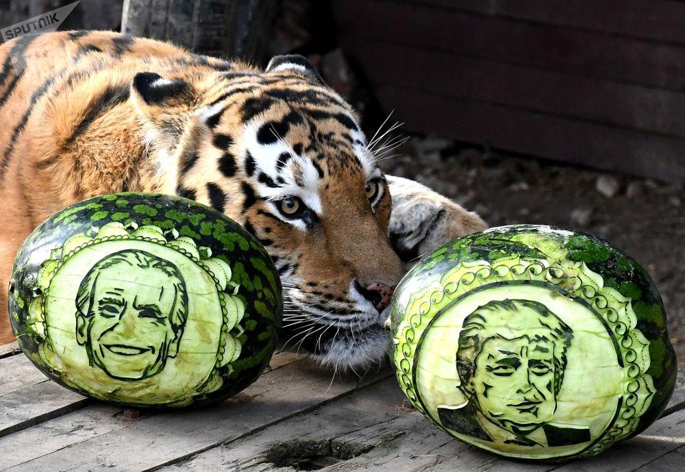 動物預測美國大選結果