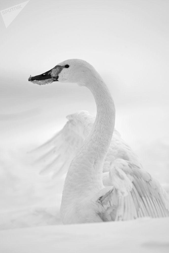 生活里的天鵝童話:攝影師弗拉基米爾·維亞特金的創作