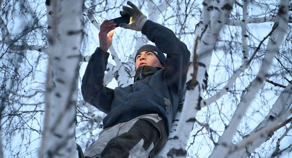 鄂木斯克一個村莊的大學生為了在Zoom上網課不得不爬上白樺樹