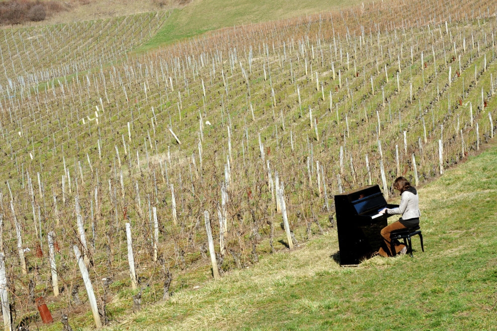 一名法國鋼琴家在葡萄園演奏