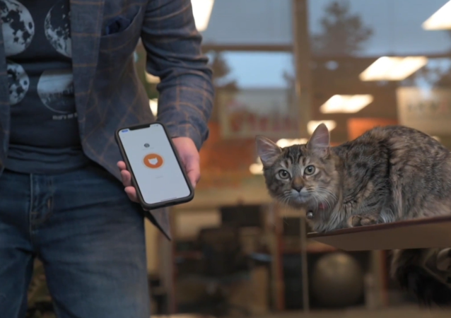 貓咪叫聲翻譯軟件