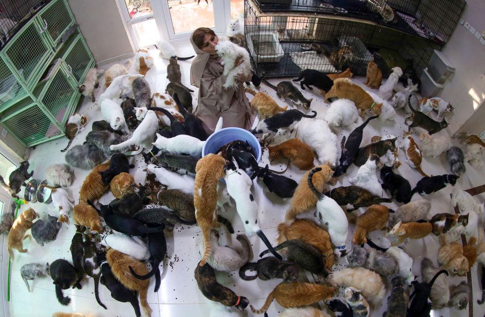 阿曼女子與480只貓和12只狗共處一室