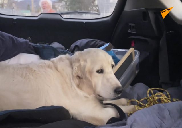 無人機找回一隻在森林迷路10天的小狗