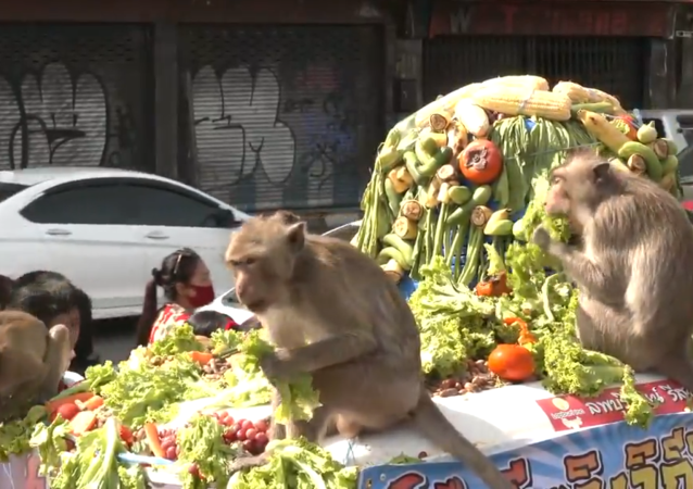 泰國舉辦年度「猴子自助餐」宴會