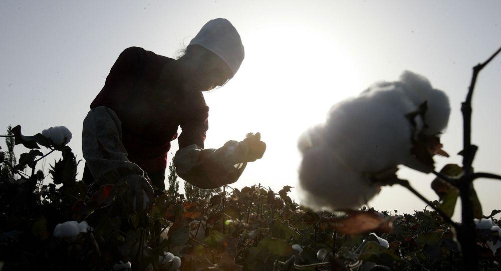 BCI官網下架「抵制新疆棉花」聲明