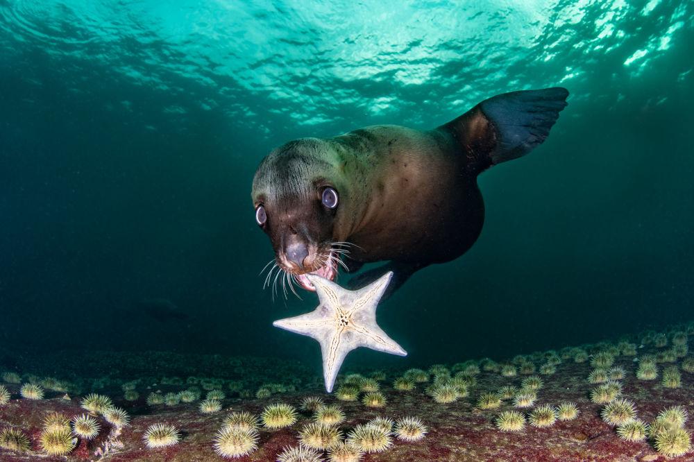2020年海洋藝術水下攝影大賽獲獎作品和入圍作品展