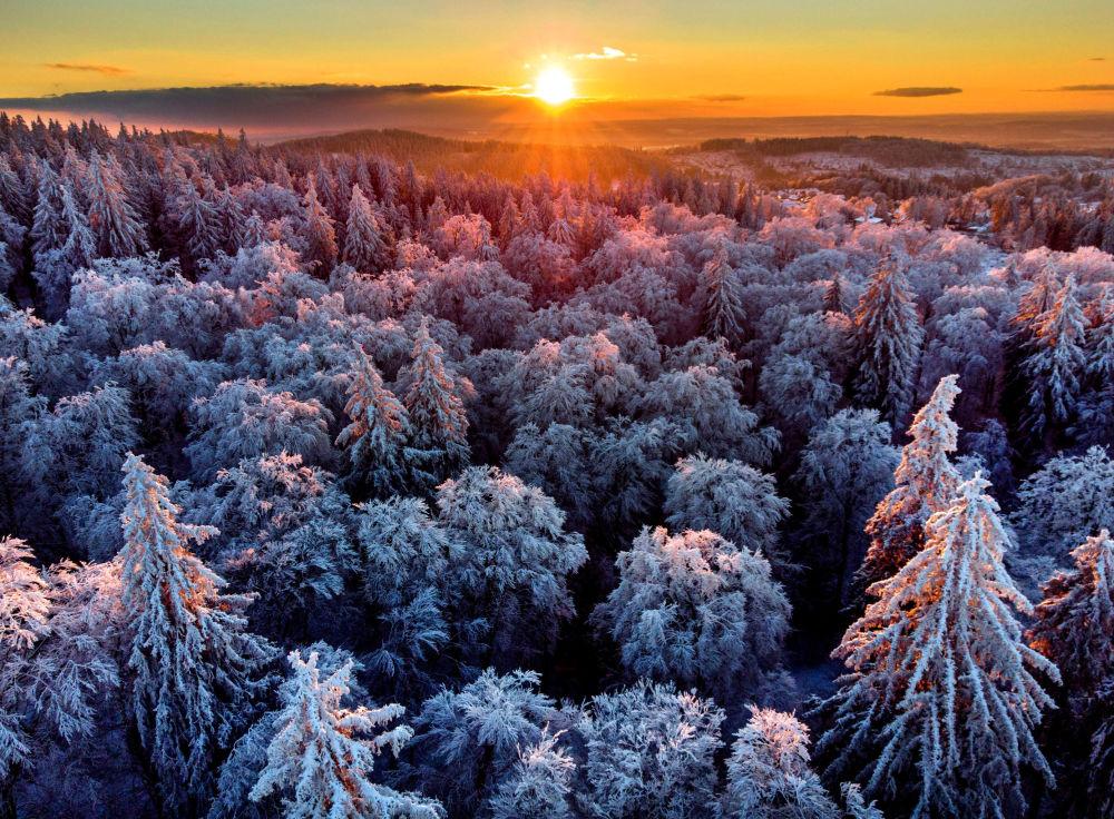 德國,法蘭克福不遠處白雪皚皚的森林。