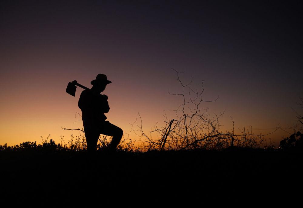 加沙城以東,夕陽下,一個巴勒斯坦農民拿著斧子的剪影。