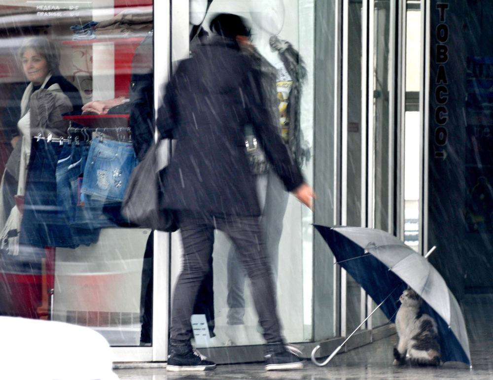 馬其頓首都斯科普里一家商店前,一隻貓藏在雨傘下。