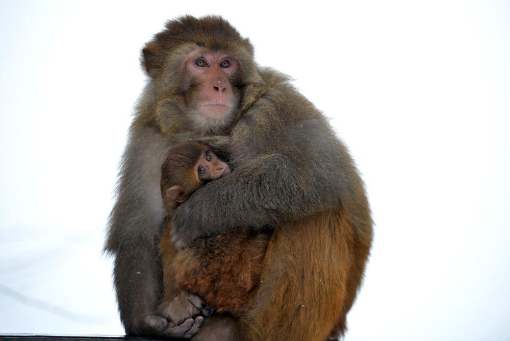 猴媽媽抱著自己的孩子取暖。
