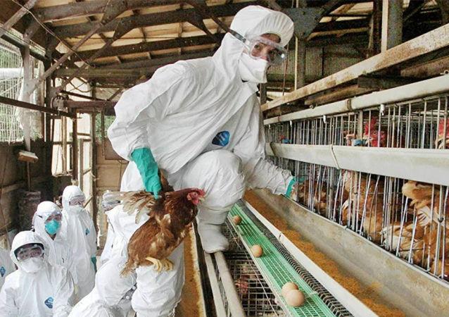 韓國發現第102處H5N8禽流感疫情暴發點