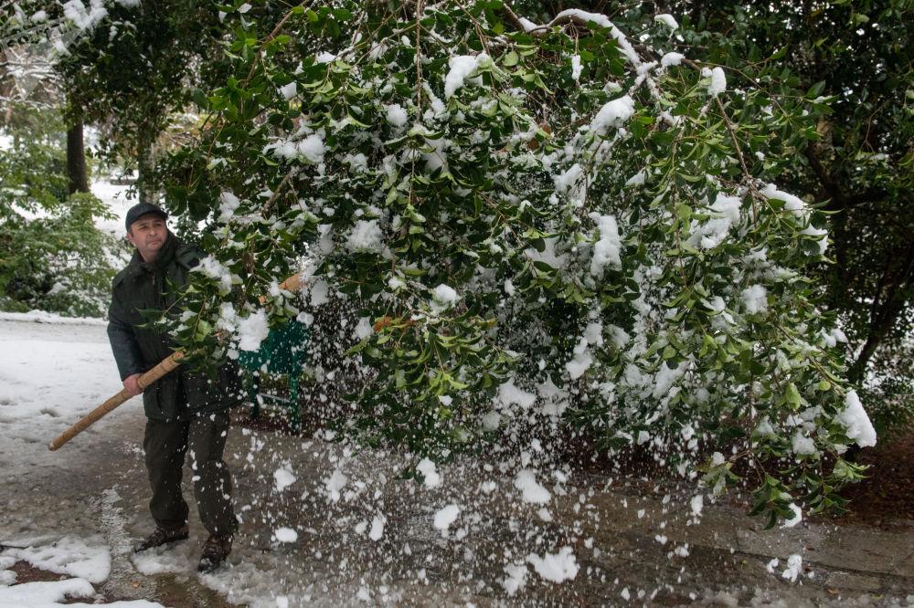 索契市「堅德拉里伊」公園組織職工清掃植被積雪。