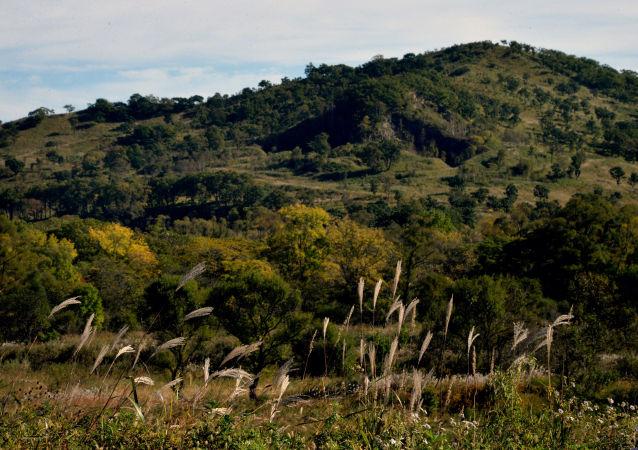 俄自然資源部長表示俄羅斯不會出現私人森林