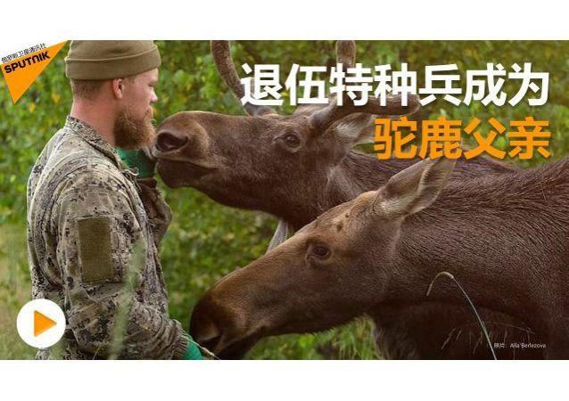 駝鹿父親:退伍特種兵開辦保護動物園