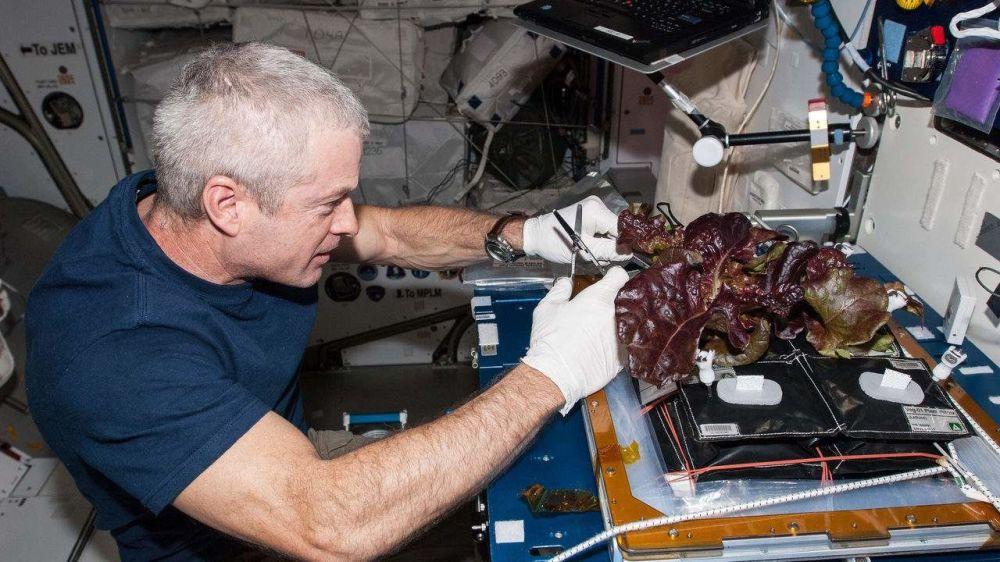 美國航天員斯蒂文在國際空間站採收養殖蔬菜。