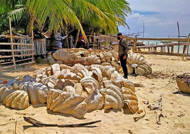菲律賓當局緝獲200噸硨磲