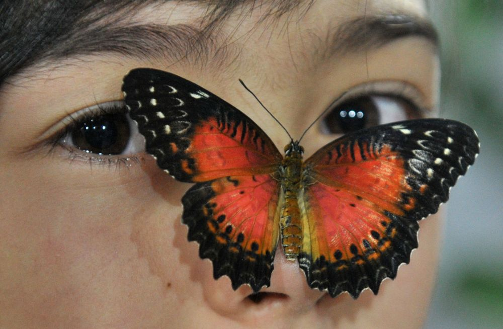 比什凱克女孩臉上的一隻蝴蝶。
