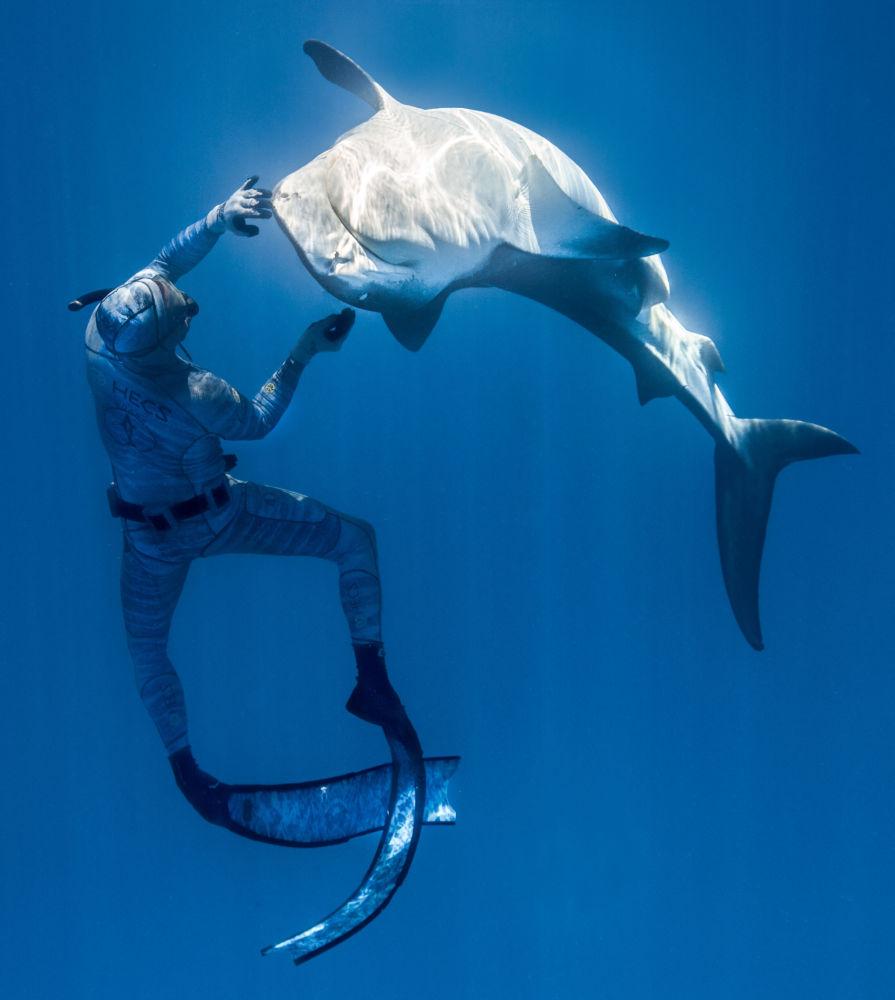 法國自由潛水員皮耶里克在水下與野生鯊魚互動。