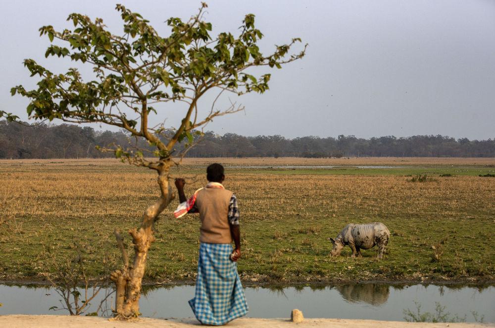 印度男子與野生獨角犀牛。