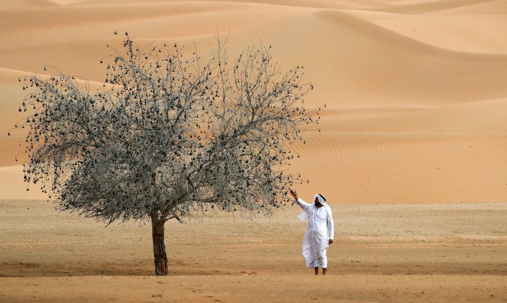 阿聯酋沙特邊境沙漠。