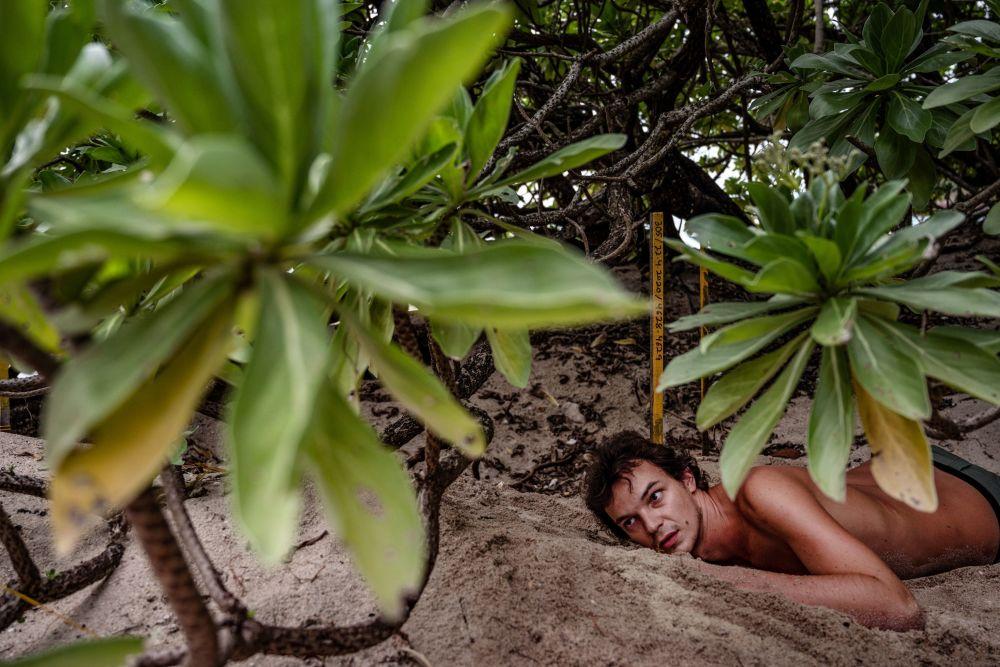 法國志願者在馬拉西亞海灘清理海龜蛋。