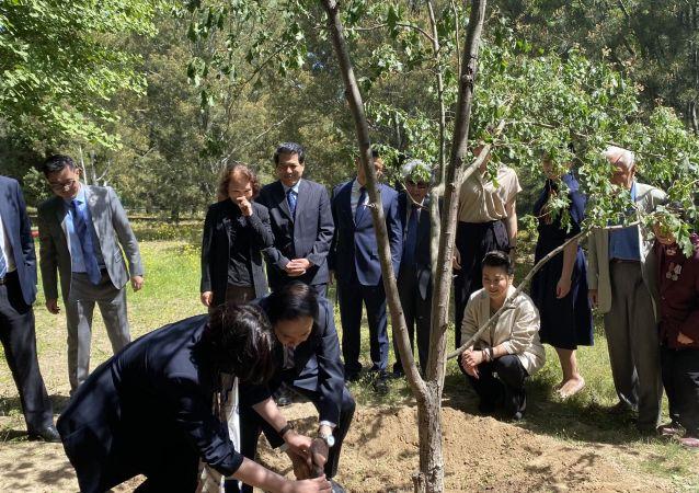 俄中友誼紀念樹種植活動在北京舉行