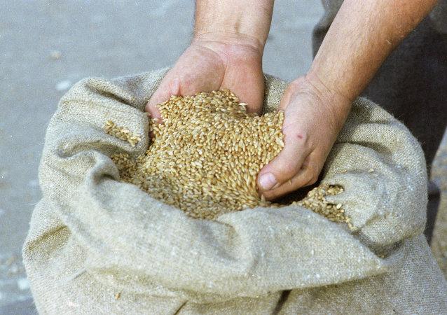 敘利亞從俄方收到8.1萬噸小麥的人道主義援助