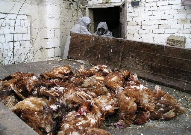 因H7N9流感威脅 香港撲殺批發市場所有家禽