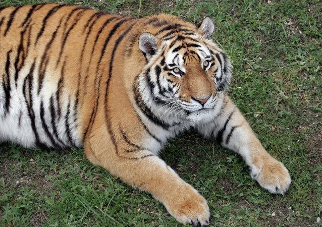 吃掉3只老虎的中國商人獲刑13年