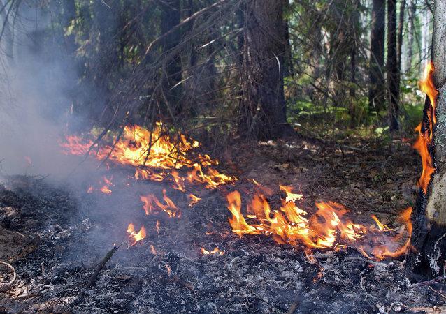 俄緊急情況部準備幫助希臘撲滅森林大火
