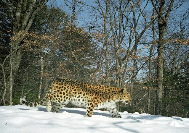 「豹之鄉」國家公園