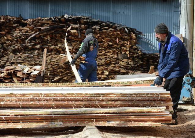 黑龍江松林公司將在俄投資建設木材加工廠