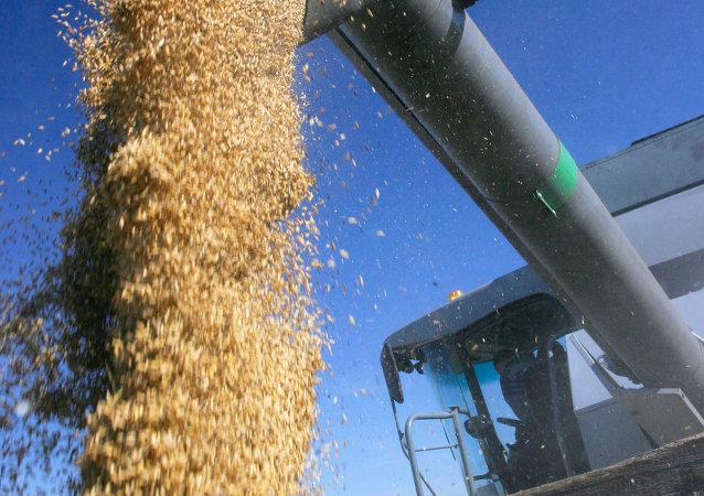 今年1-8月滿洲里口岸進口俄羅斯糧食5.4萬噸
