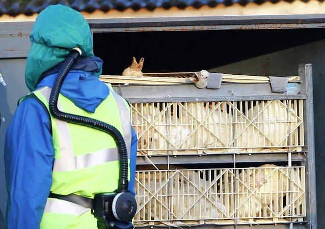 韓國禁止從瑞典進口家禽