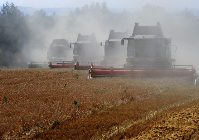 Grain harvesting in Otradaagroinvest, Mtsensk District, Oryol Region