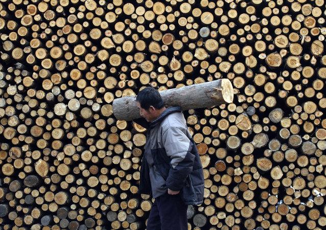 俄副總理:俄政府不打算放棄原木出口禁令