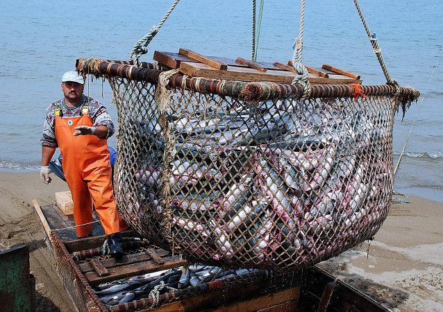 俄總理批准有關非法捕魚問題的國家行動計劃
