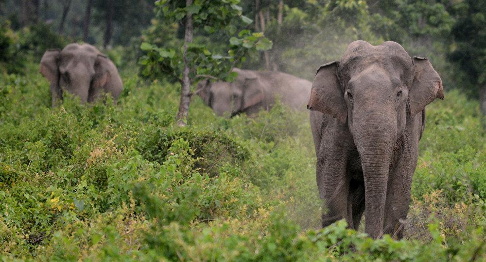 雲南一農婦受野生大象攻擊身亡