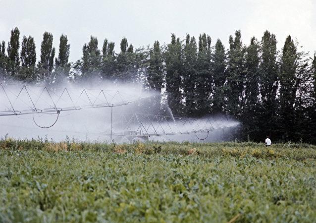 俄猶太州州長:綠色食品的需求保障農產品對華出口量增長