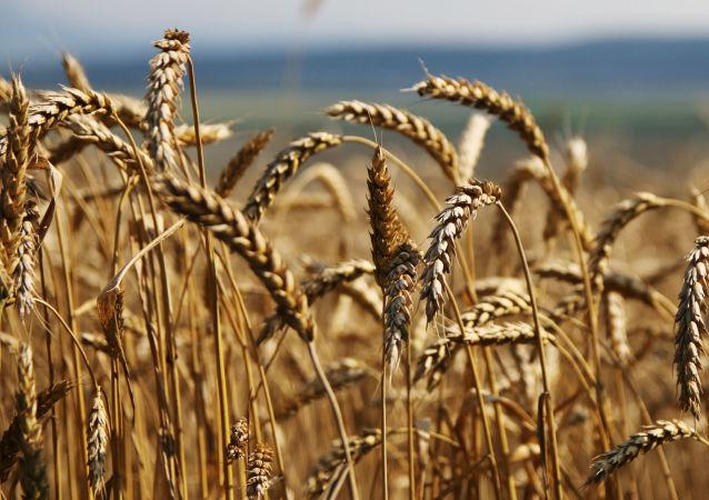 中國統計局:中國糧食庫存充足 全年食品價格保持穩定有基礎