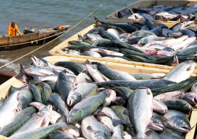 日本企業將可以通過投資遠東漁業換取捕魚配額